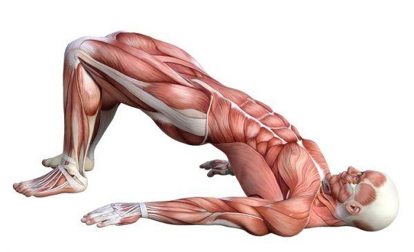 10 Ejercicios para fortalecer tu espalda y tonificar abdominales 6