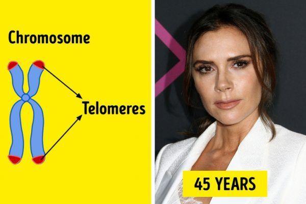 Los telómeros y el acné